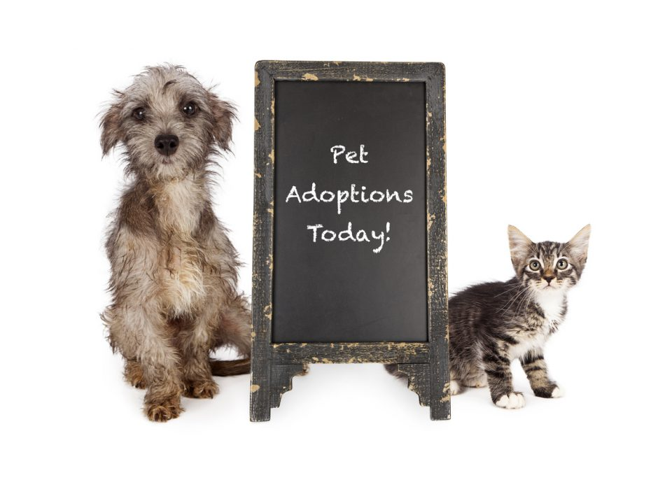 Rescue Pets for adoption at Sulphur Springs Animal Shelter